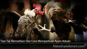 Tipe Taji Mematikan Dan Cara Memperkuat Ayam Aduan